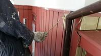 日立市 K様邸 外壁塗装(中塗り・上塗り)