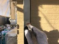 水戸市 A様邸 樋塗装(ケレン・下塗り・中塗り・上塗り)
